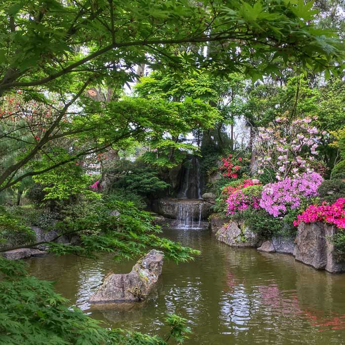 View of pond on Japanese Garden